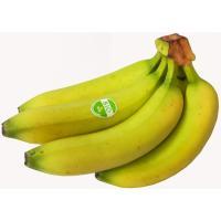 Banana ecológica COSTA VOLCÁN, al peso, compra mínima 1 kg