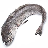 Merluza entera del País Vasco pieza al peso aprox. 2.5 kg