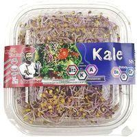 Germinados de Kale IDEAL CHEF, tarrina 50 g