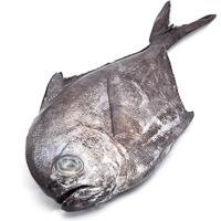 Palometa-Zapatero, pieza al peso aprox. 800 g