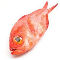 Paloma roja, al peso, compra mínima 600 g