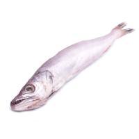 Pescadilla del Cantábrico, pieza al peso aprox. 500 g