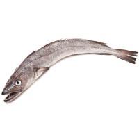 Pescadilla de azuelo del Cantábrico, pieza al peso aprox. 750 g